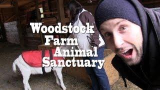 Woodstock Farm Animal Sanctuary - VEGANTRAVEL#3