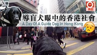 【街頭實測】香港人接納導盲犬嗎? 【A Day With The Guide Dog】Are Hong Kong people acceptive of guide dogs?