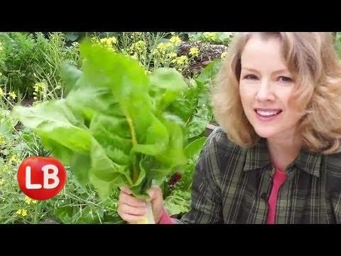 Harvesting Winter Garden Vegetables   Late Bloomer   Episode 6