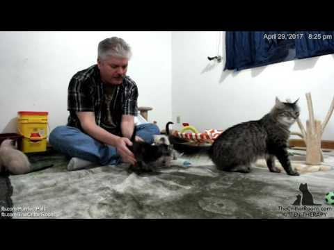 Gaia's Kittens - Evening 4-29 Part 1