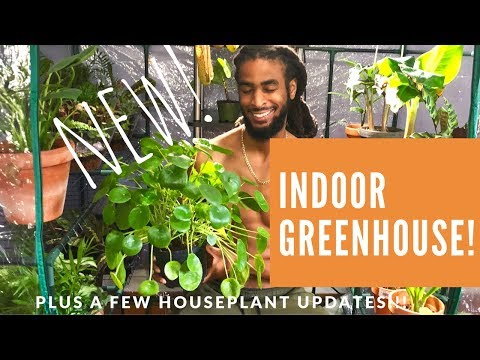 NEW INDOOR GREENHOUSE! | A FEW HOUSEPLANT UPDATES | AND MORE...1080p