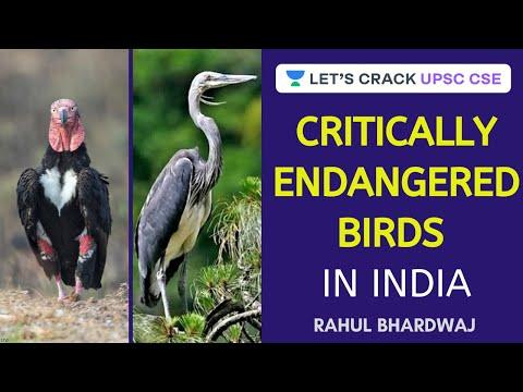 Critically Endangered Birds In India   Crack UPSC CSE 2020/2021   Rahul Bhardwaj