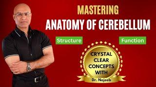 Cerebellum Anatomy - Structure \u0026 Function - Neurology - Neuroanatomy