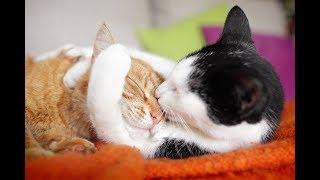 Kucing lucu comel imut gemes bikin ketawa ngakak part 9