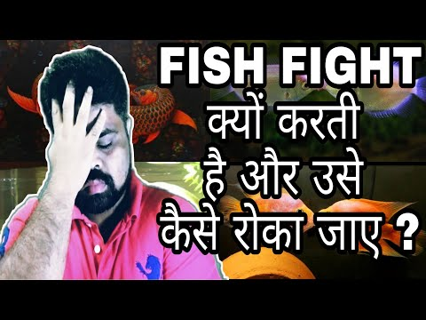 Why Aquarium Fish Fight ? What Are The Solutions ? In Hindi