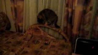 Кошка против танков