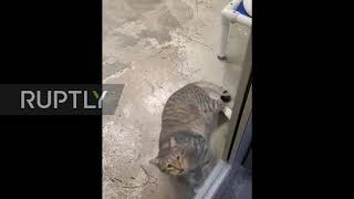 Shelter Cat Sentenced To Solitary Confinement For Freeing Comrades