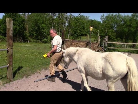 Homemade Permanent Horse Paddock Fencing