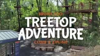 Zip and Climb at Treetop Adventure | Bronx Zoo