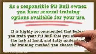 Types Of Dog Obedience Training Available For Your Pit Bull Terrier
