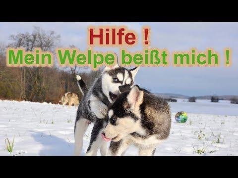 Mein Welpe / Junghund beißt mich? Ist das normal? Und was kann ich dagegen tun? / Nature Trails