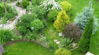 видео Вечнозеленые кустарники: фото с названиями и описанием