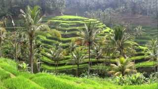 Sustainable Agriculture in Bali