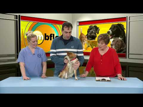 Adopt Maya From The Buffalo Animal Shelter