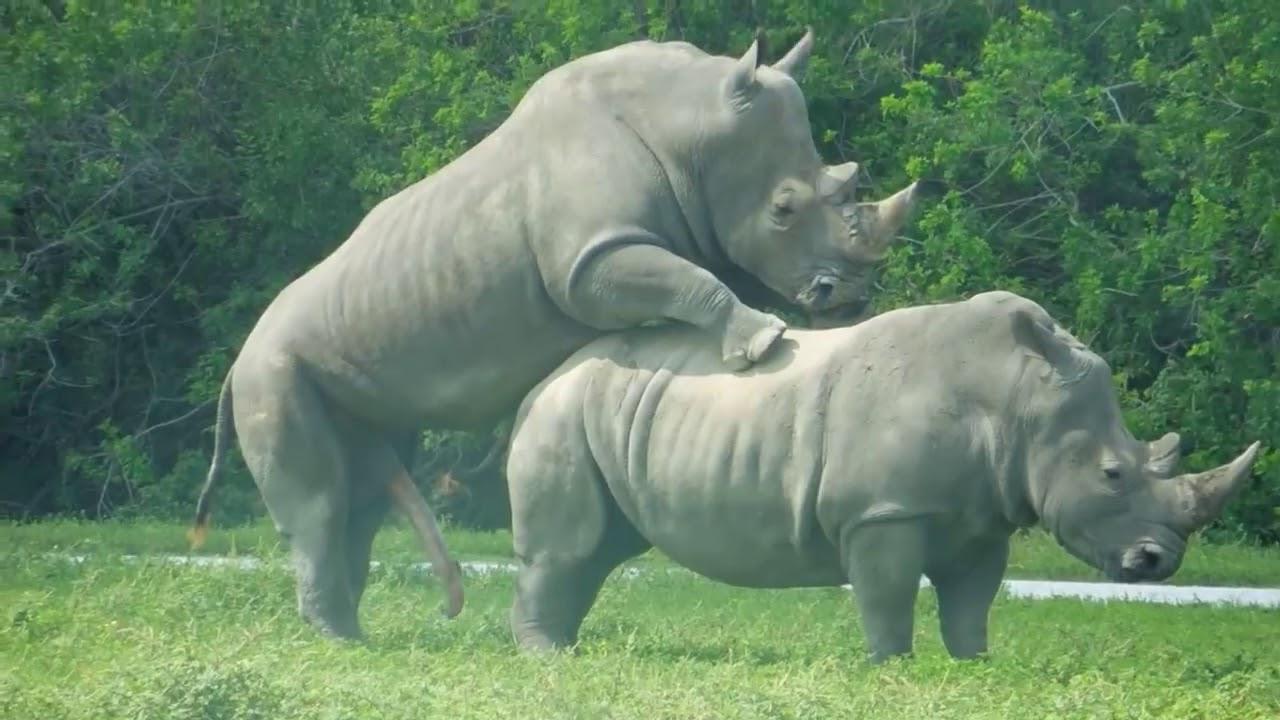 Rhino moms the international rhino foundation blog