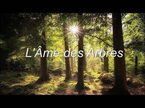 L' ÂME DES ARBRES - Stéphane Brisset