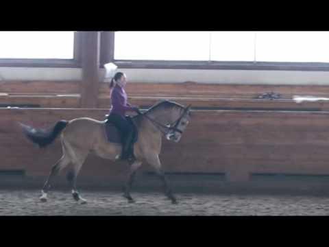 конный спорт работа