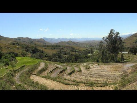 Burning forest for crops threatens Madagascar farmers