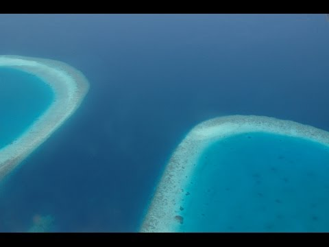 Euro Divers Maldives   All Dive Centres