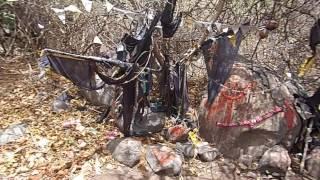 33. Гирнар. Ашрам Джина Бабы. Место Кали. Жаль собак.