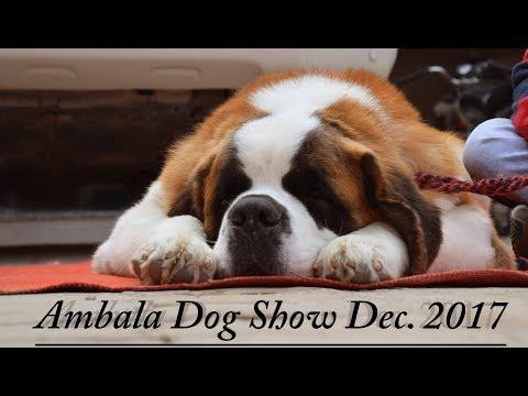 Ambala Dog Show December 2017