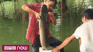 Cá trê hàng chục kg tại Hồ Gươm bị câu trộm