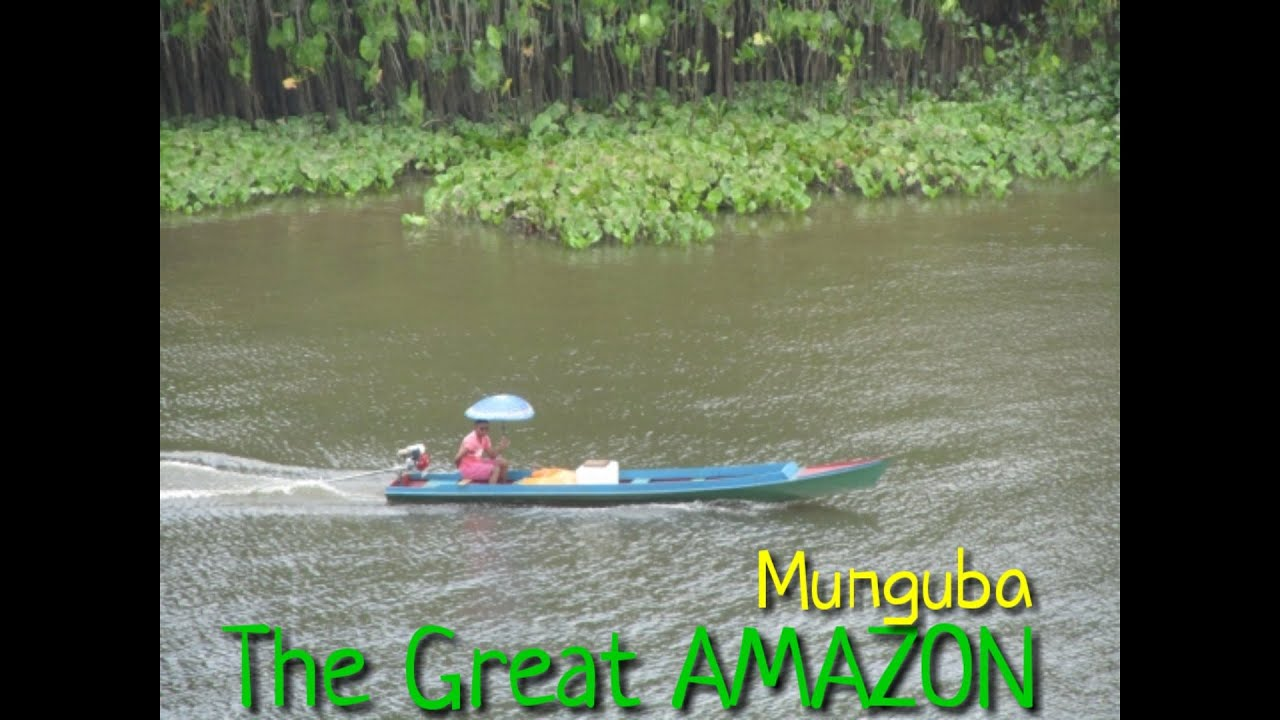 The Great AMAZON Rainforest/Jari river/Munguba/Monguba village /Into deep amazon/Boat ride in amazon