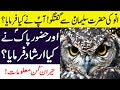 Ullu Ki Hazrat Suleman A S Se Mulaqat Aap S A W Ne Kya Farmaya Facts About OWLS In Hindi Urdu