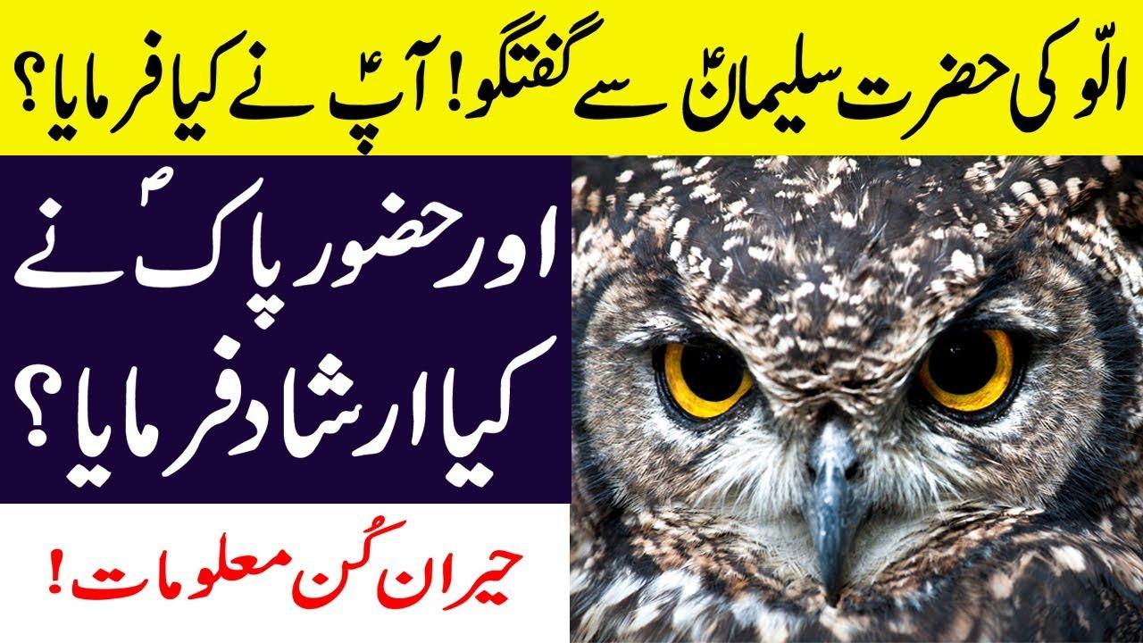 Download Ullu Ki Hazrat Suleman A.S Se Mulaqat || Aap S.A.W Ne Kya Farmaya? Facts About OWLS in Hindi/Urdu
