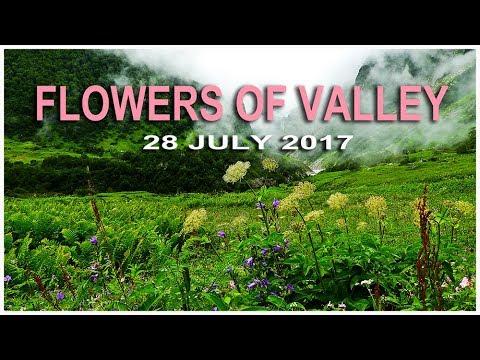 Flowers Of Valley, Valley Of Flowers(VOF),Uttarakhand,Chamoli District,Uttarakhand,India