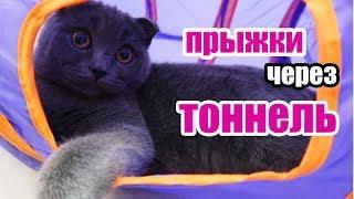 Котенок Баттерс ПРЫГАЕТ через ТОННЕЛЬ | Прыжки через ТОННЕЛЬ