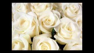 Фильм,,Белые розы!!