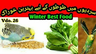 Best Food in Winter for Australian parrots, Sardi me best food in Urdu/Hindi by |Arham|. Vdo. 26