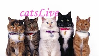 Коты-придурки! Нарезка самых смешных моментов с котами 2016-2017 часть 10(CatsLIVE)
