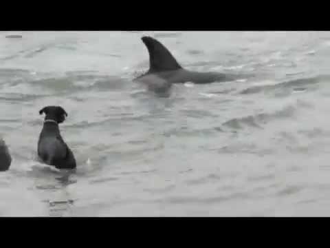 A kutya kergeti a botot, az orka pedig a kutyát