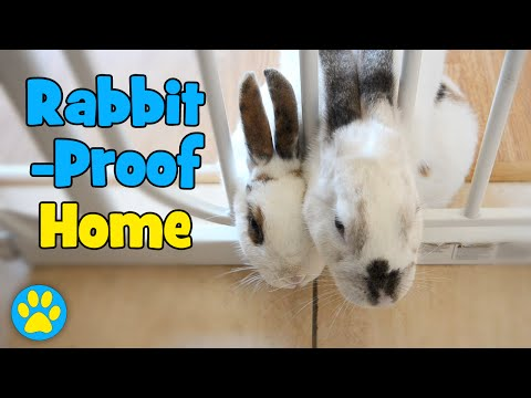 3 Ways To Rabbit-Proof Your Home