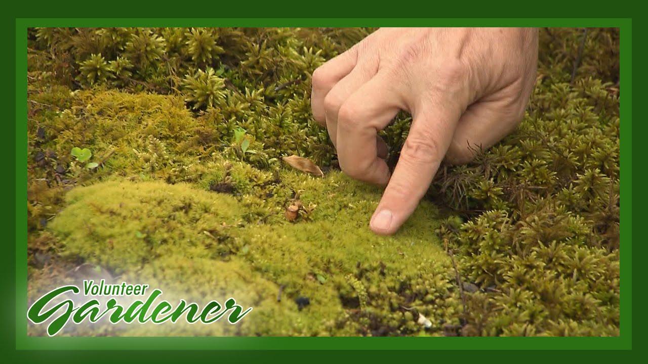 A Moss Garden | Volunteer Gardener