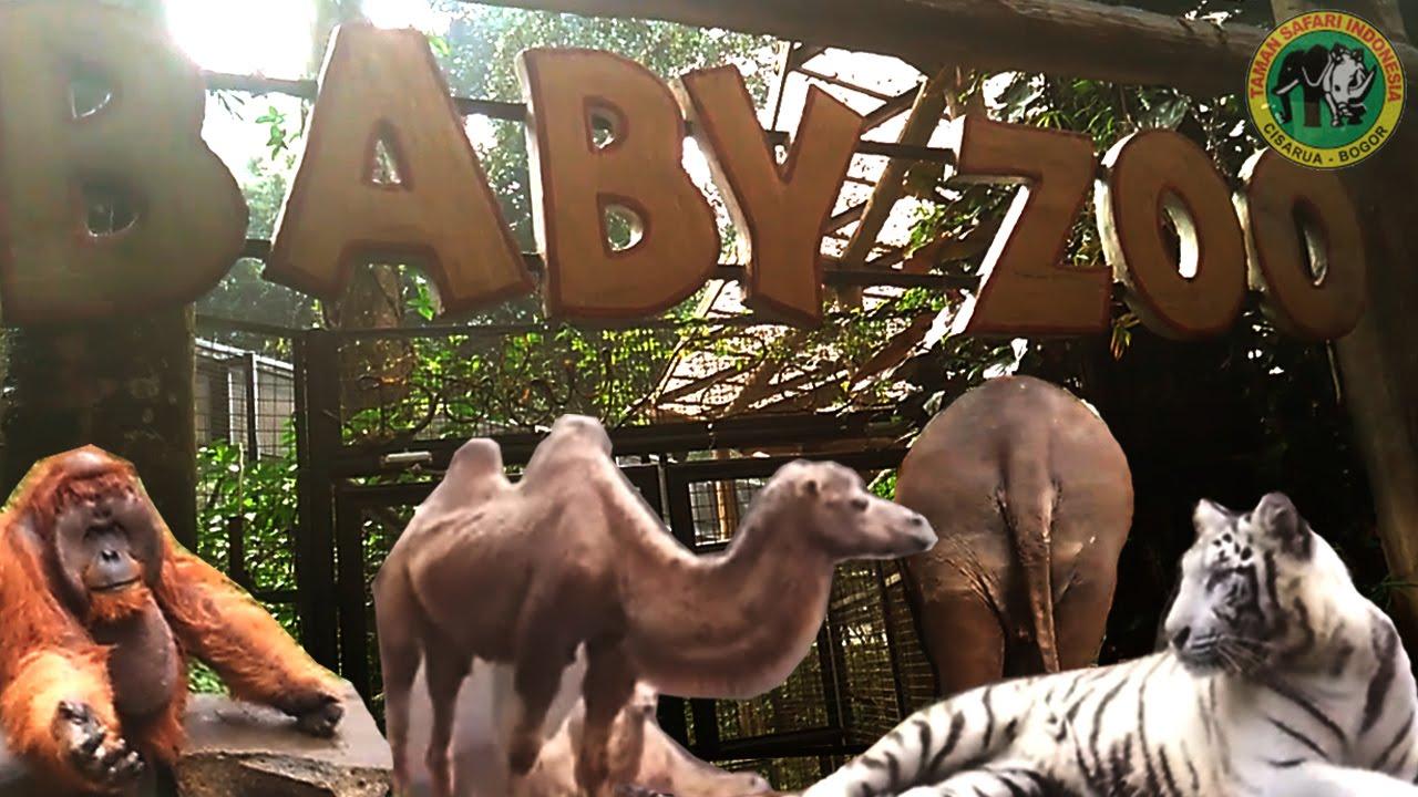 Baby Zoo Liburan Ke Taman Safari Indonesia Youtube