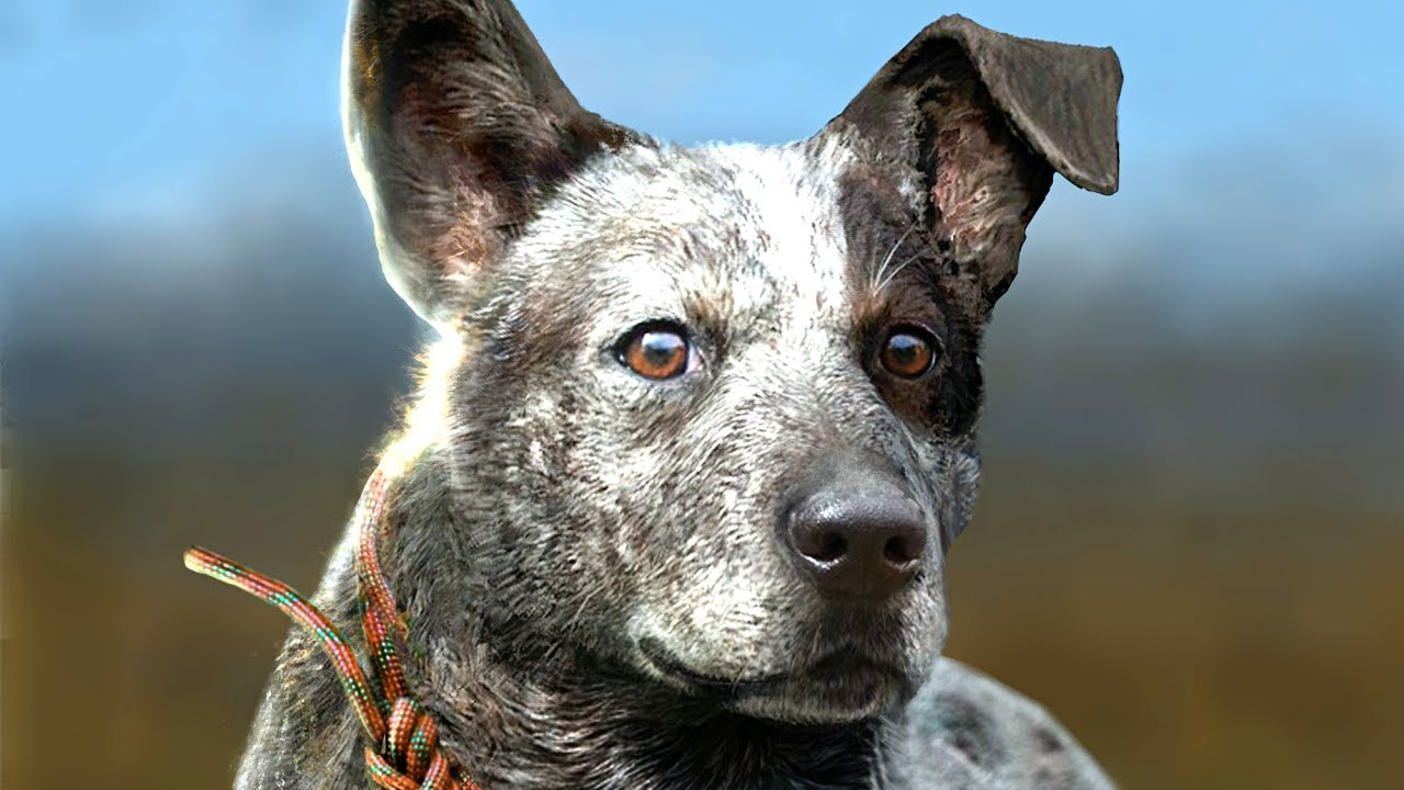 Puppies In Fall Wallpaper Far Cry 5 Boomer The Dog Gameplay Walkthrough E3 2017
