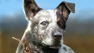 FAR CRY 5 BOOMER THE DOG GAMEPLAY WALKTHROUGH E3 2017