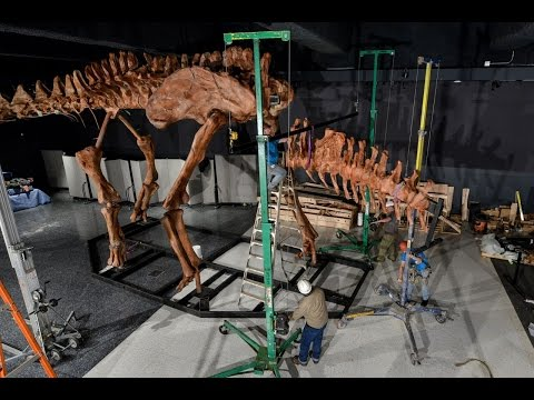 How the titanosaur discovery exhibits modern paleontology