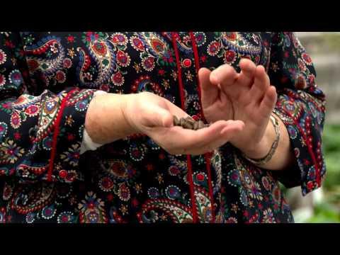 Удобрения для роз. Советы и секреты. Выпуск 33