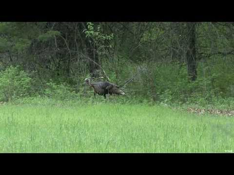 Turkey Hunting in Kansas Part 1