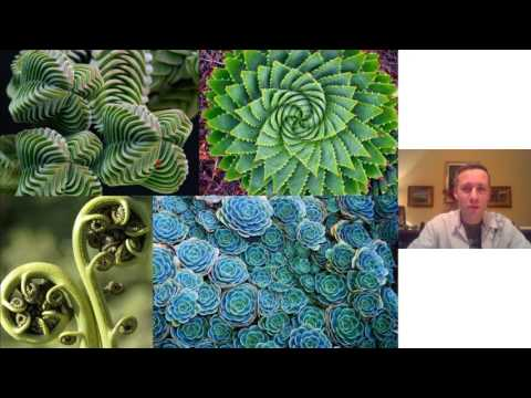 Tufan Guven:Visual Introduction to Fractal FIELD Science- FractalU-Dan Winter