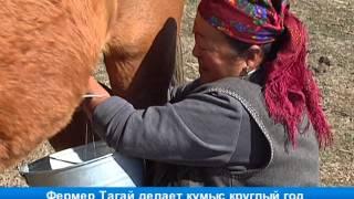Фермер Тагай делает кумыс круглый год