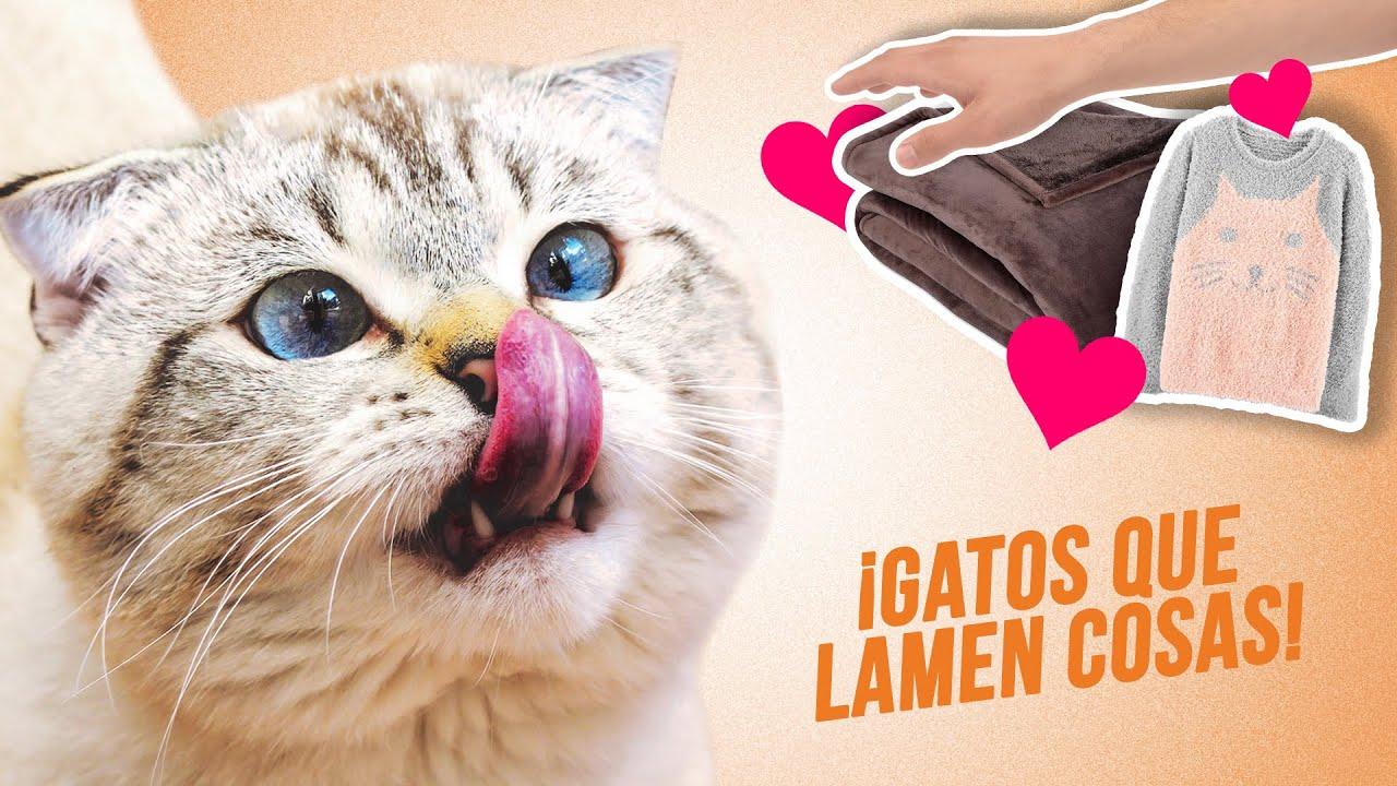 ¿Por qué tu gato lame mantas, tu brazo, tu ropa, su pezón... y más cosas? 😻👚| ¿Debes evitarlo?