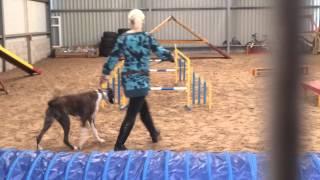 Myla Doing Dog Agility For Beginners.