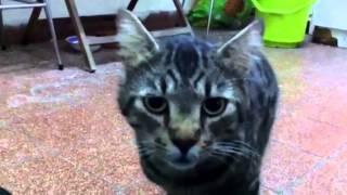 חתולונובלה - הניסוי של קדוש