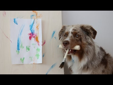 Dog Paints an Art | Pekka the Australian Shepherd
