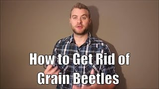 A few easy tips for how to get rid of grain beetles